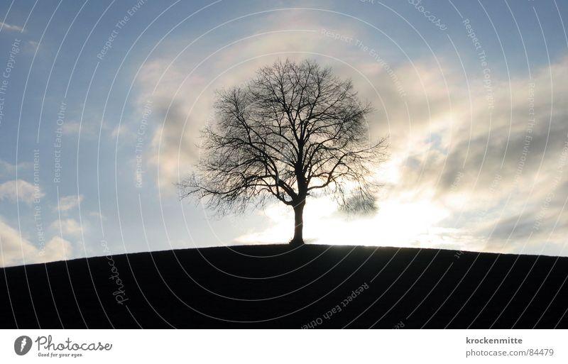 Traumbaum II Natur Himmel Baum grün Winter Wolken Ferne Wiese Gras Wind Umwelt Rasen Spaziergang Schweiz Ast Hügel