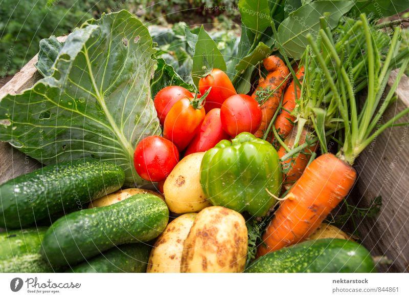 Frisches Gemüse aus dem Garten Salat Salatbeilage Bioprodukte Vegetarische Ernährung Sommer Natur frisch Gesundheit Billig Qualität garden vegetables food