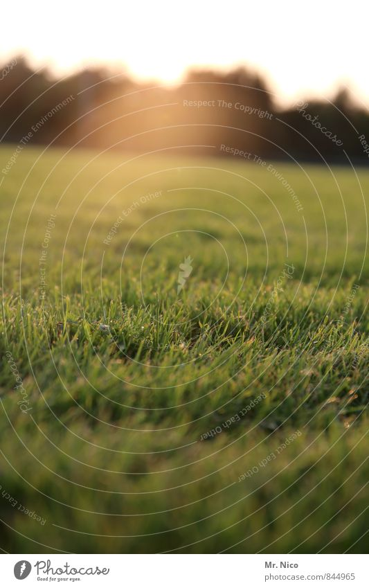 sungrass Umwelt Natur Landschaft Sonnenlicht Pflanze Gras Sträucher Garten Park Wiese gelb grün Idylle Wachstum Sportrasen Rasen rasenmähen Halm Sportplatz