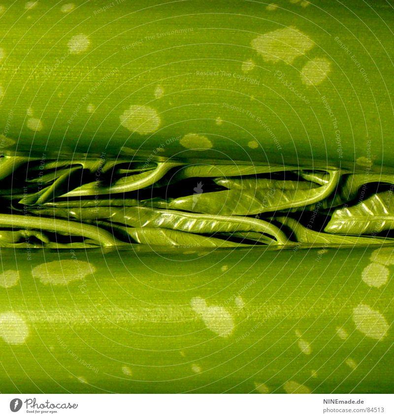 Wunder der Natur grün Baum gelb Furche Baumstruktur Baumstamm Schlitz Wachstum Reifezeit Quadrat rund durcheinander interessant befleckt junge Blätter