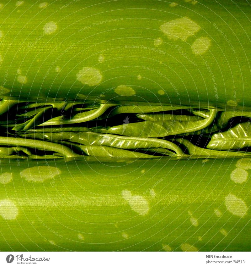 Wunder der Natur grün Baum gelb Garten Wachstum rund Quadrat Baumstamm Bioprodukte durcheinander Fleck Furche Irritation Spalte interessant