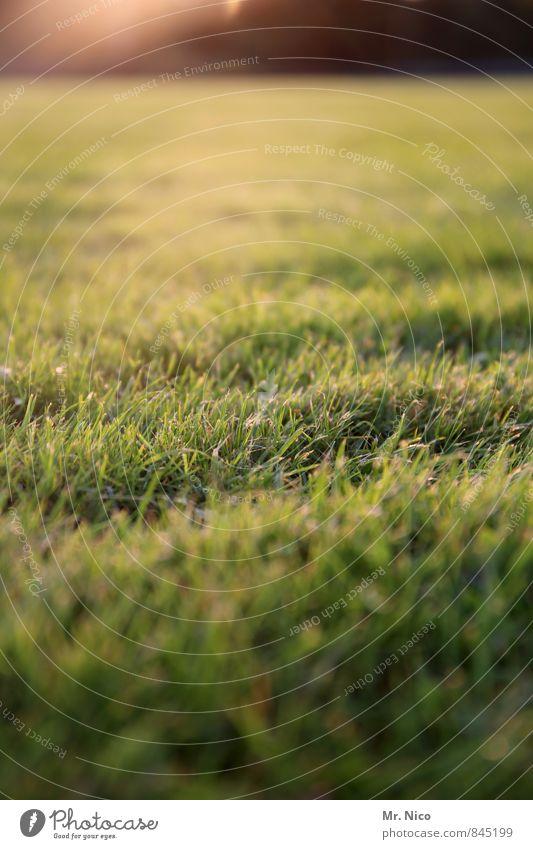 rasenteppich Natur Pflanze grün Sommer Landschaft Umwelt gelb Wiese Gras Frühling Garten Park Wetter Wachstum Idylle Sträucher