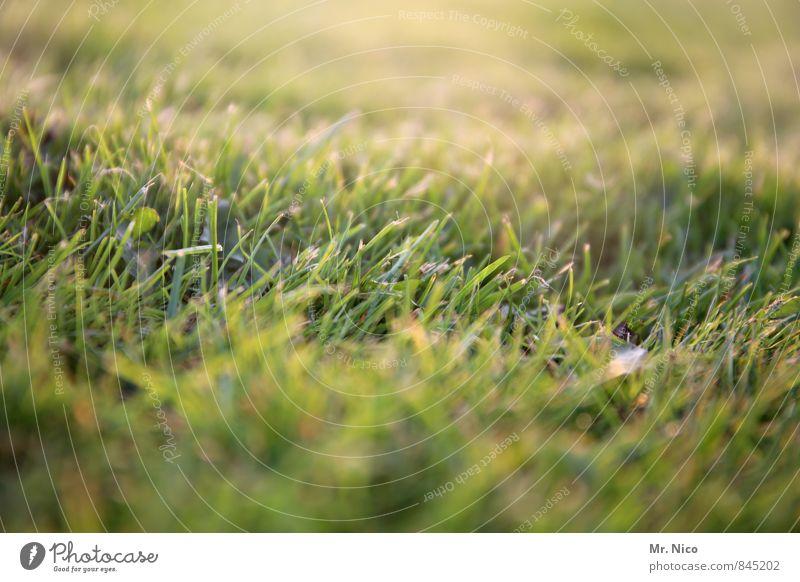 grass Natur Pflanze grün Sommer Landschaft Umwelt gelb Wiese Gras Frühling Garten Park Wachstum frisch Tiefenschärfe Weide