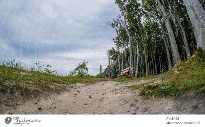 Waldesrandbank Landschaft Sand Himmel Wolken Sommer Baum Erholung Farbfoto Außenaufnahme Tag Schwache Tiefenschärfe Froschperspektive Fischauge