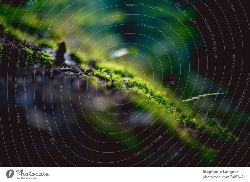 flauschiger Waldboden Natur Pflanze träumen Erde elegant frisch ästhetisch fantastisch Duft atmen Wildpflanze