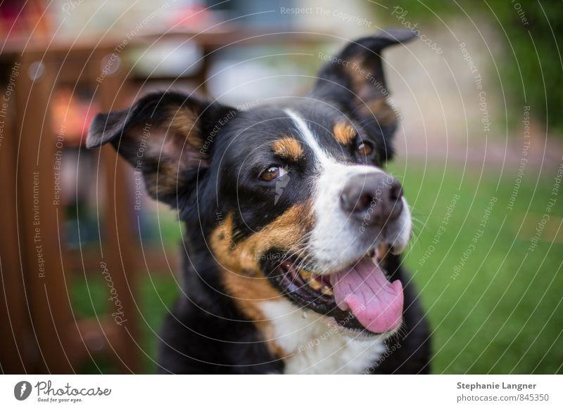 Gutgelaunt! Hund schön Freude Tier lustig Glück lachen Gesundheit Kraft Zufriedenheit Erfolg frei Fröhlichkeit Lächeln genießen fantastisch