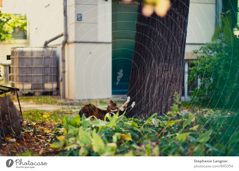 Fit in den Frühling Garten Park Tier Katze 1 Diät Bewegung Erholung genießen hängen Sport Freude Fröhlichkeit selbstbewußt Tierliebe Trägheit bequem Morgensport