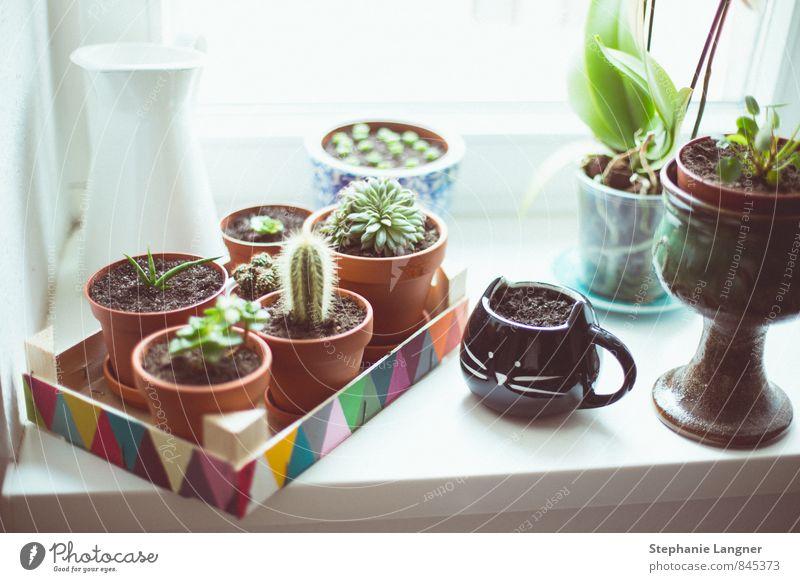 Fensterbrettchen einrichten Innenarchitektur Dekoration & Verzierung Raum Pflanze Grünpflanze Häusliches Leben Freude Glück Lebensfreude Frühlingsgefühle Kaktus