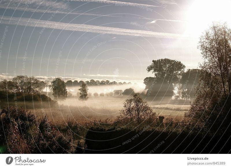 Blick von Mama´s Terrasse Himmel Natur blau Pflanze grün Sonne Baum Landschaft ruhig Wolken Umwelt gelb Wärme Herbst Gras Feld