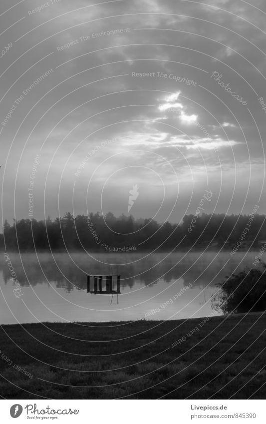 Badespaß am Müritzarm Umwelt Natur Landschaft Pflanze Wasser Himmel Wolken Sonnenlicht Herbst Nebel Baum Gras Sträucher Wildpflanze Seeufer Holz Zusammensein