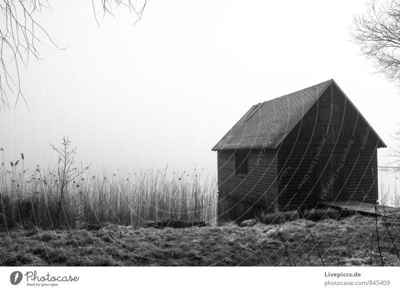 Bootshaus am Ufer der kleinen Müritz Himmel Natur Pflanze weiß Wasser Baum Landschaft ruhig Wolken Haus schwarz kalt Umwelt Herbst Gras grau