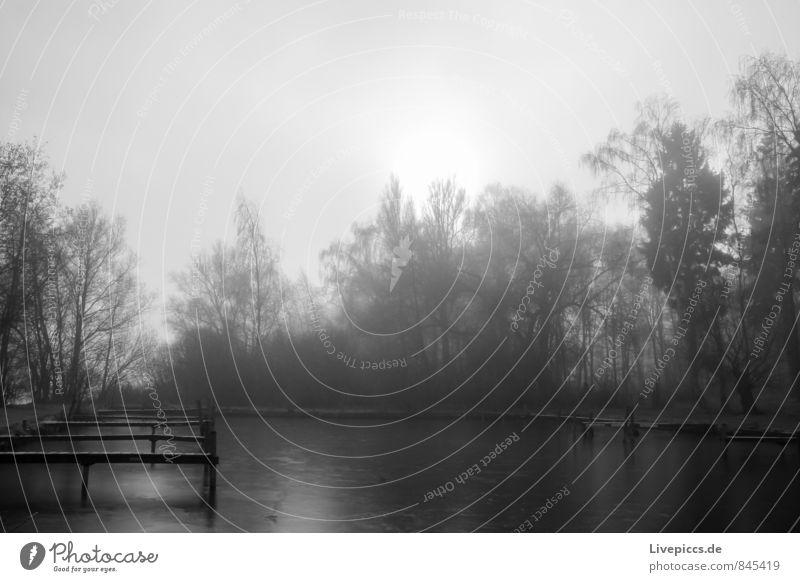 am Ufer der kleinen Müritz Himmel Natur Pflanze weiß Wasser Sonne Baum Landschaft ruhig schwarz Umwelt Herbst grau Holz See wild