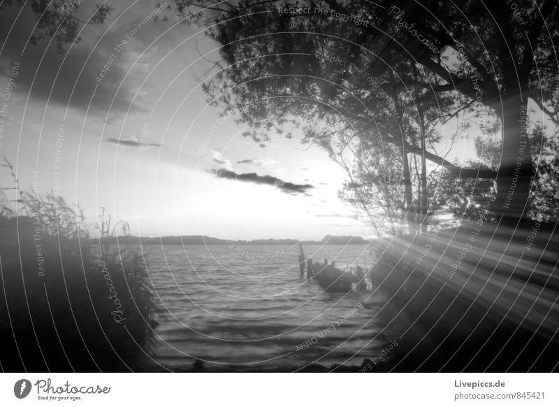 am Ufer der kleinen Müritz Himmel Natur Ferien & Urlaub & Reisen Pflanze weiß Wasser Sommer Sonne Baum Landschaft ruhig Wolken Strand schwarz Umwelt grau
