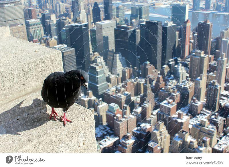 New York, New York Stadt Sonne Tier Ferne Winter Bewegung Schnee Architektur Lifestyle Wachstum Kraft Hochhaus Tourismus authentisch Aussicht beobachten