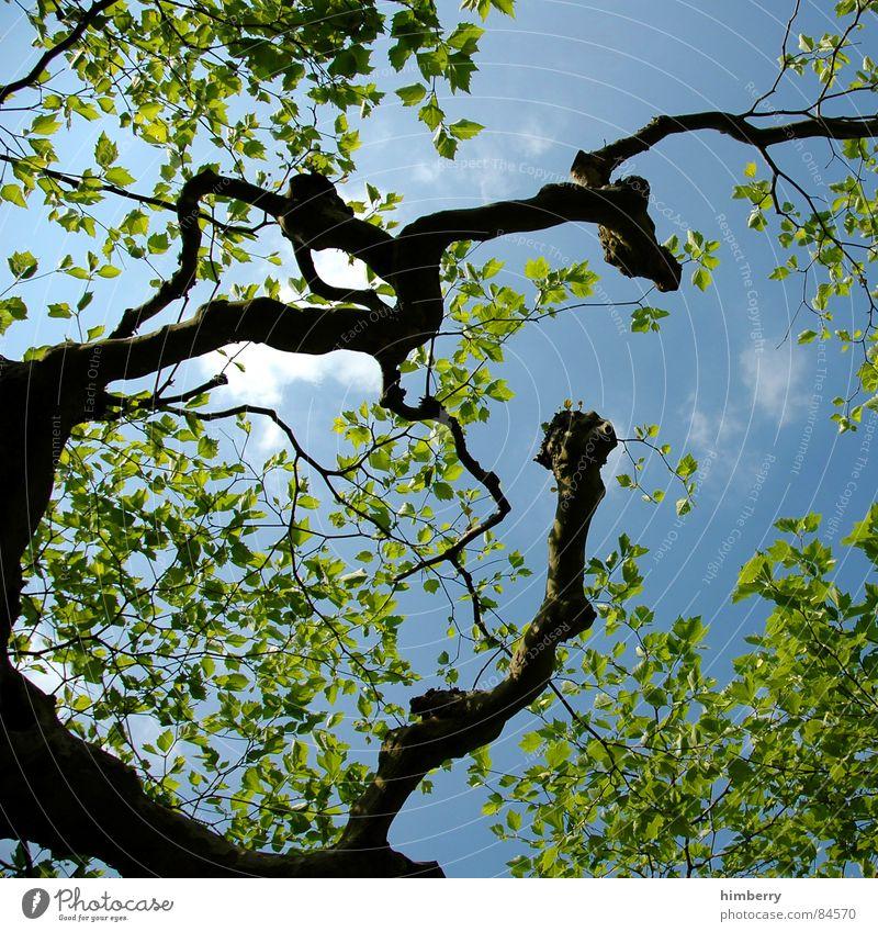 skylines Baum Natur grün Blatt Baumstamm Baumkrone Ast Himmel Garten Landschaft Gartenbau Zweig Landschaftsformen Frühling