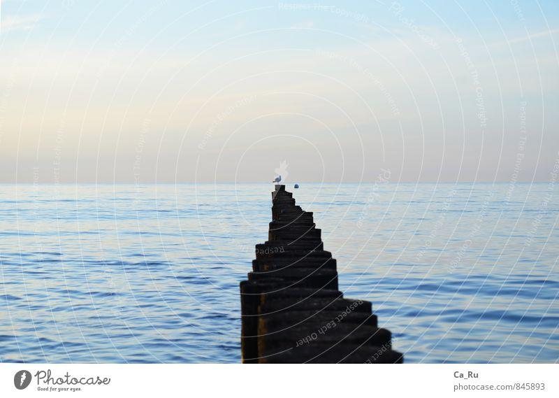 Ostseefreiheit Tier Wildtier Vogel Möwe 1 Holz Wasser achtsam Abenteuer Einsamkeit Freiheit Ferne Wunsch Zufriedenheit Bunen Dreizehenmöwe Farbfoto