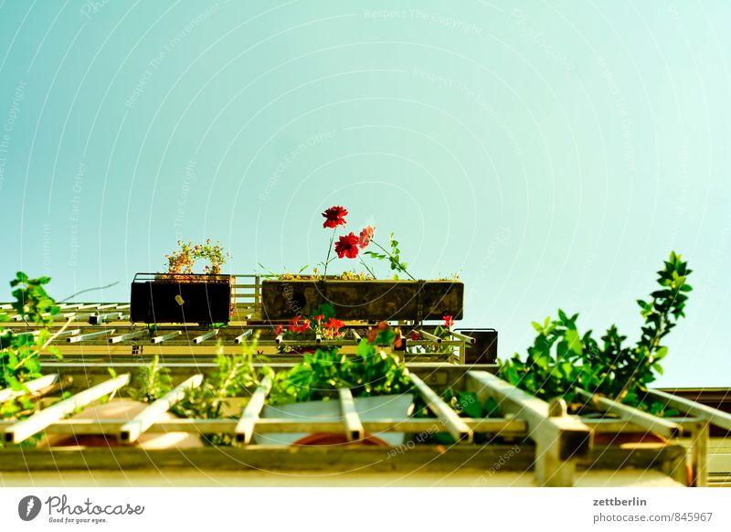 Sommer Balkon Blume Blühend Blüte Erholung Feierabend Garten grün Stadt Stadtleben Häusliches Leben Wohngebiet Blumenkasten Himmel Textfreiraum steil