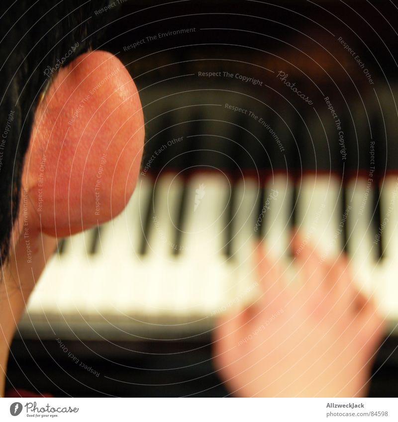 Der Lauschangriff Segelohr Klavierschemel Klavierauszug hören Spielen Publikum Gehörsinn Kunst Kunsthandwerk Konzentration Konzert Musik riesenlauscher