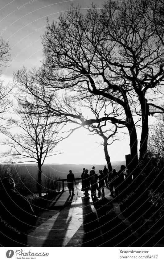Damals... Beleuchtung See Hügel Sonne Sonnenstrahlen Physik schön traumhaft Baum kalt Baumkrone Gegenlicht schwarz angenehm Erholung Natur Aussicht Steg