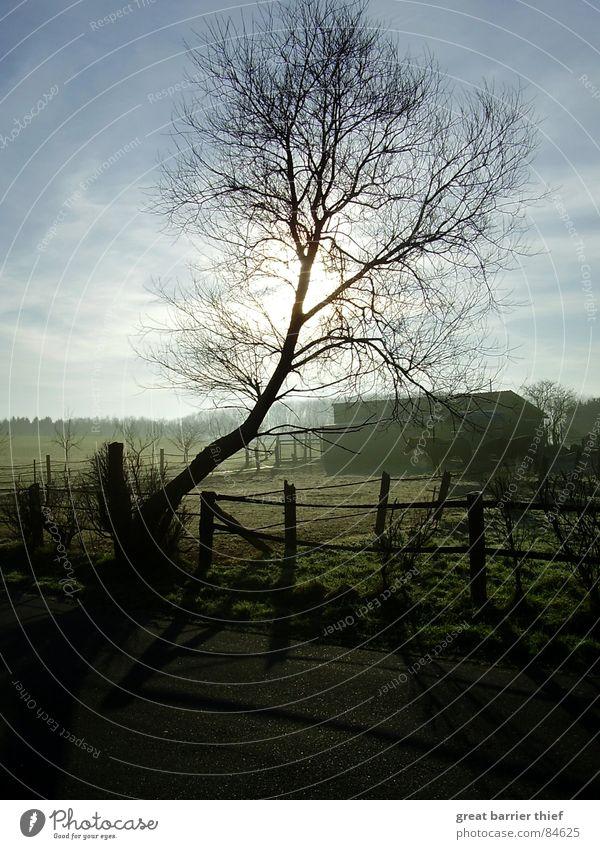 I love mornings Baum Pferd Tier Wiese Nebel Kondensstreifen Asphalt Stimmung grün Licht Himmel Winter schön Straße Schatten Zweig Landschaft