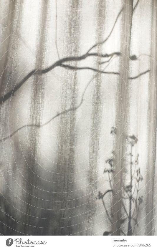 am Fenster ruhig Natur Pflanze Sonnenlicht natürlich friedlich Sehnsucht Design Zufriedenheit Nostalgie träumen Vorhang Fensterblick Schatten Herbst Ast Zweig