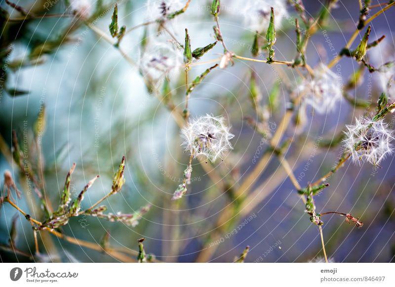 Spitzen Umwelt Natur Pflanze Sträucher Wildpflanze natürlich grün Farbfoto Außenaufnahme Makroaufnahme Menschenleer Tag Schwache Tiefenschärfe
