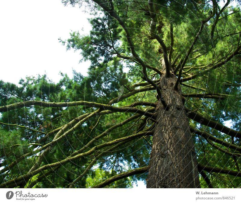 Ein Baum.Ein Geburtstagsbaum, liebe Frauke! Natur grün Sommer Landschaft Tier Umwelt Holz braun groß ästhetisch rund Baumstamm fest Grünpflanze Düsseldorf