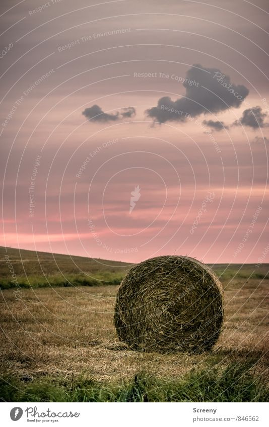 Abends im Feld... Landwirtschaft Forstwirtschaft Natur Landschaft Pflanze Himmel Wolken Sonnenaufgang Sonnenuntergang Sommer Schönes Wetter Heu Heuballen Dorf
