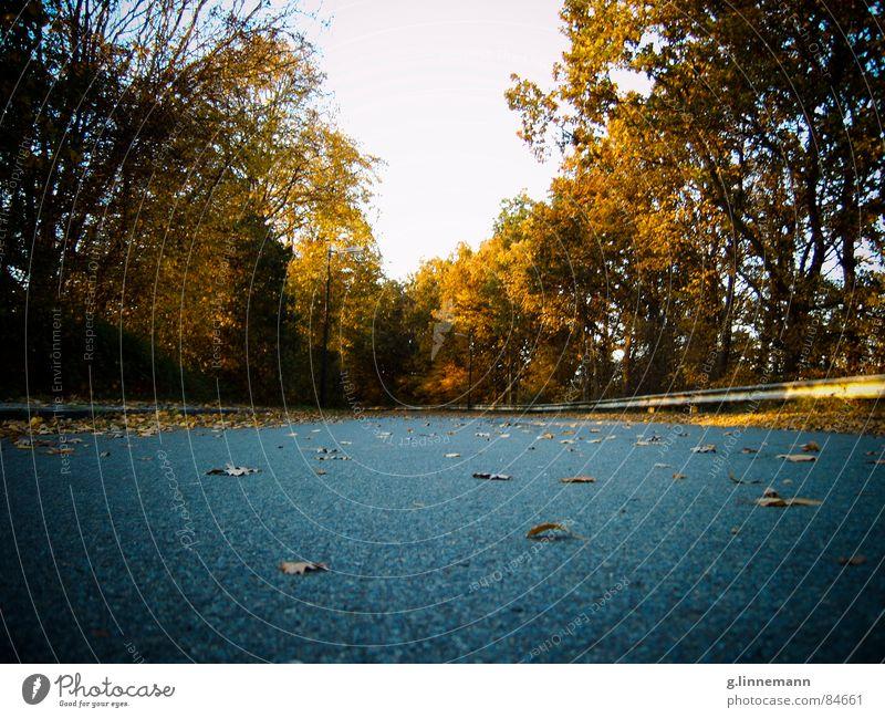 Kein Ende in Sicht Himmel Baum Straße Herbst Stein Wege & Pfade gehen Horizont verrückt Bodenbelag Asphalt Autobahn Grenze Aussicht Verkehrswege tief