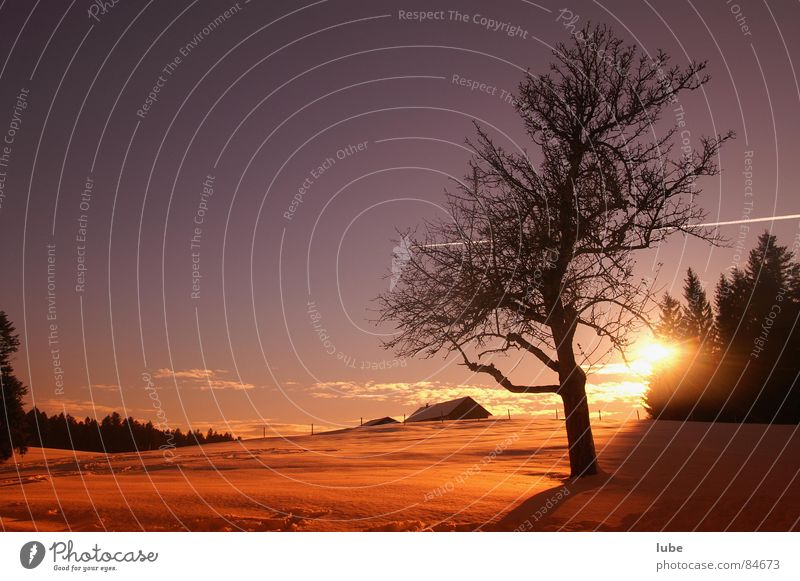 Wintersonne Neuanfang Stimmung Winterstimmung Sonnenuntergang Sonnenaufgang Morgen Abend Himmel Morgendämmerung Abenddämmerung