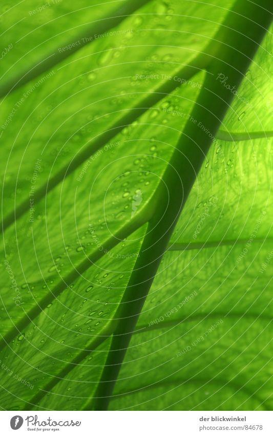Das Blatt hat sich gewendet Natur grün Pflanze Blatt verrückt Stengel diagonal Botanik Pflanzenteile