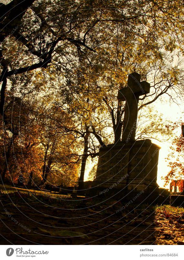 Endstation Sonne ruhig Herbst Tod Traurigkeit Denken Religion & Glaube Rücken Trauer Frieden Vertrauen Denkmal Verzweiflung Meinung Ruhestand Gebet
