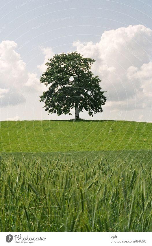 Ich stehe immer noch . . . schön Himmel Baum grün Sommer ruhig Wiese Feld Kraft Europa ästhetisch Macht Bauernhof Hügel stark Landwirtschaft