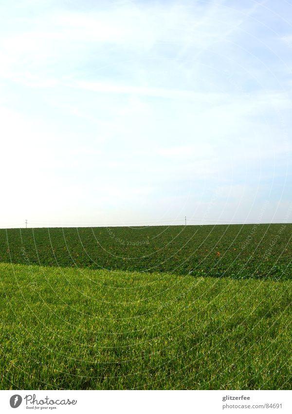 himmel auf erden Himmel grün Wiese Frühling Feld Rasen Amerika Ernte Fee anbauen