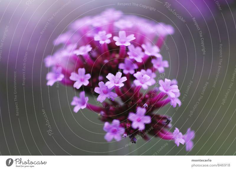 biene außerhalb des bildrandes Natur Pflanze schön Sommer Blume Blatt Umwelt Blüte natürlich klein wild authentisch frisch ästhetisch weich einzigartig