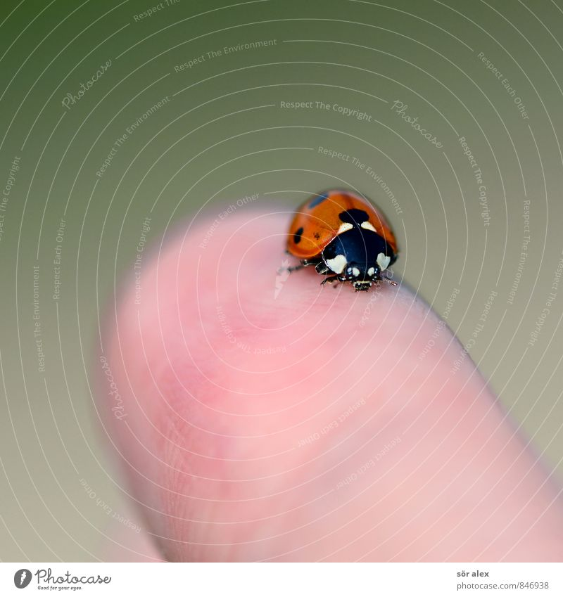 Fingerspitzengefühl Finger Käfer Insekt Marienkäfer 1 Tier Glück Intuition Glücksbringer Farbfoto Außenaufnahme Menschenleer Textfreiraum links