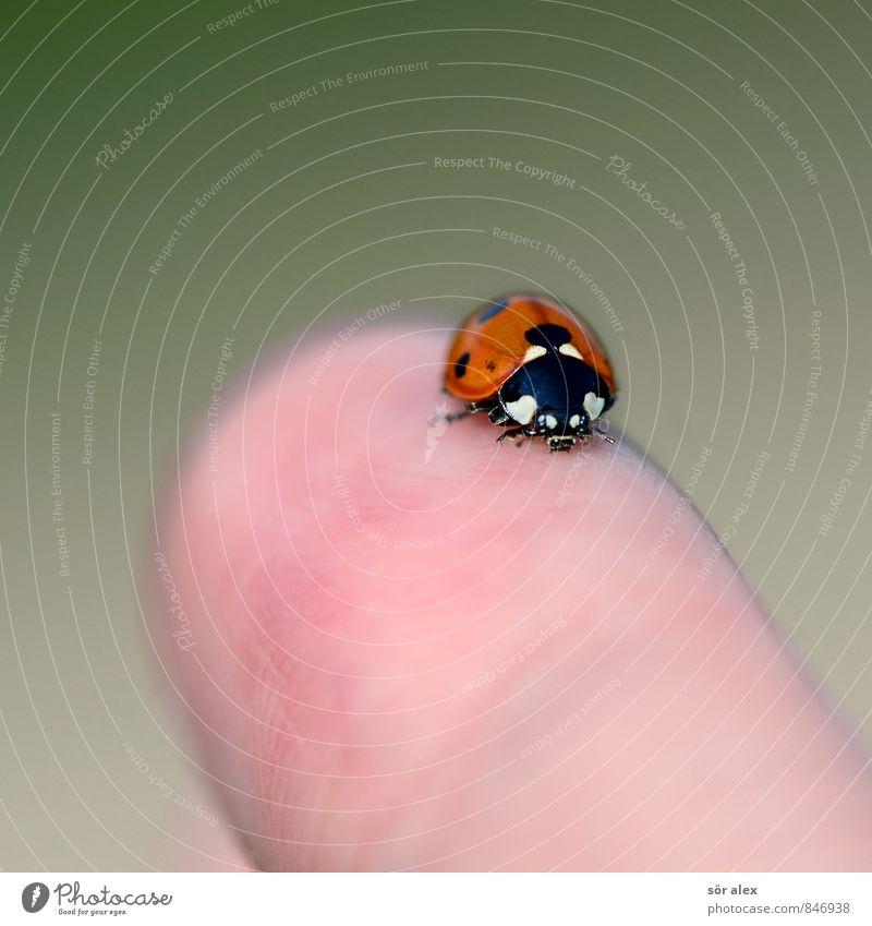 Fingerspitzengefühl Tier Glück Finger Insekt Käfer Marienkäfer Intuition Glücksbringer