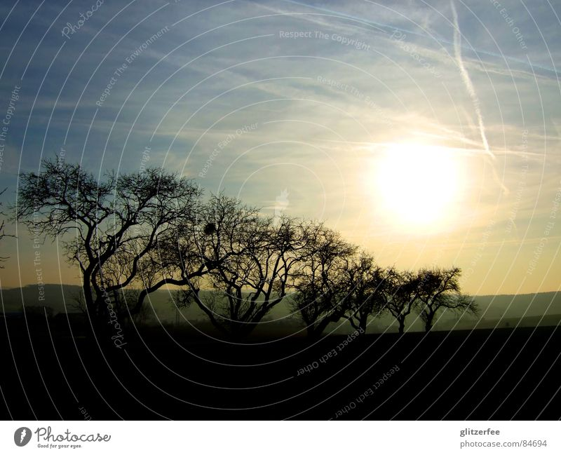 lebensraum Himmel Baum Sonne ruhig Wiese Feld Horizont Ast Baumstamm Leiter Allee Fee Schleier Nest Wintersonne