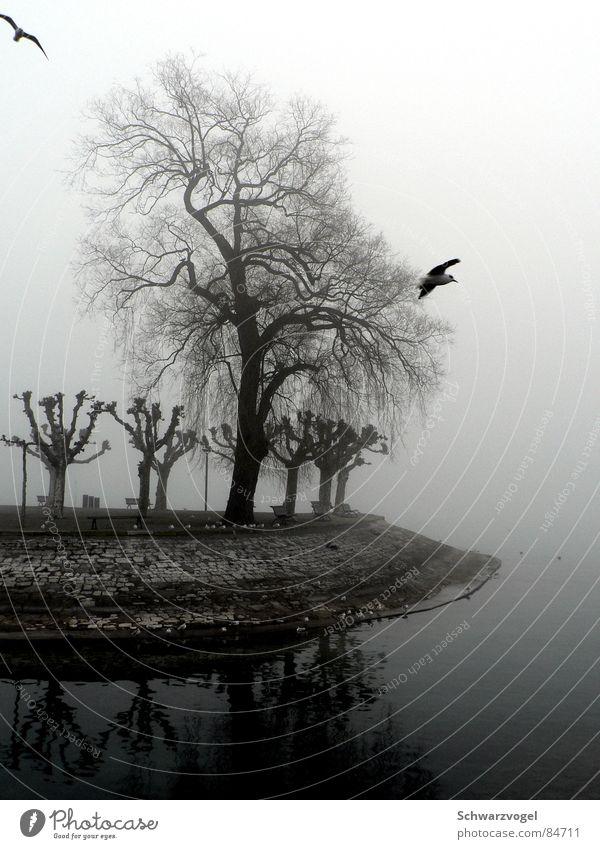 Wächter des Nebels Wasser Baum Winter ruhig Einsamkeit grau Traurigkeit See Vogel trist geheimnisvoll feucht verloren bewegungslos Wasserdampf