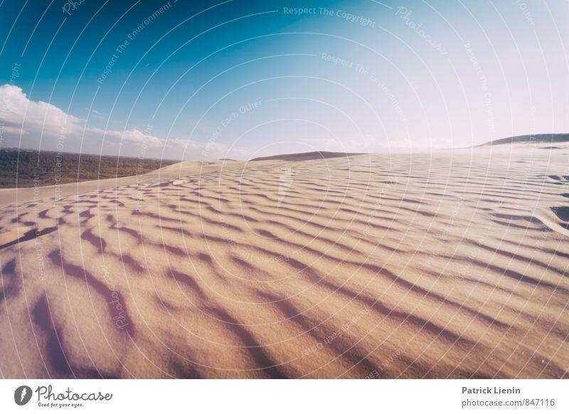Sommer auf der Düne Natur Ferien & Urlaub & Reisen Sonne Einsamkeit Erholung Landschaft ruhig Ferne Umwelt Wärme Freiheit Freizeit & Hobby Wetter Zufriedenheit
