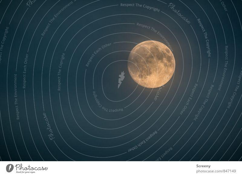 Keks Mond Vollmond Sommer leuchten groß hell rund Weltall Himmelskörper & Weltall Farbfoto Außenaufnahme Menschenleer Textfreiraum links Textfreiraum unten