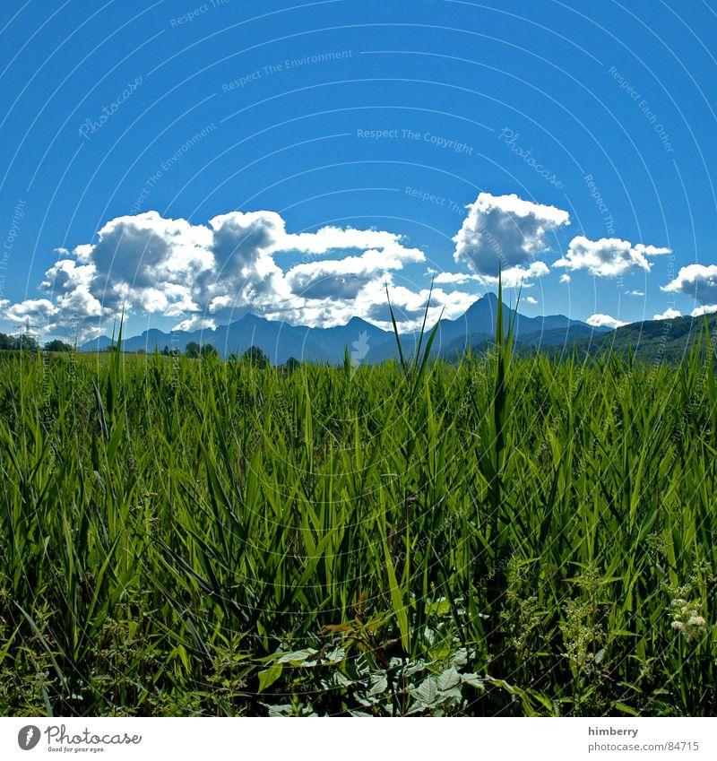 riviera royal Natur Gras Berge u. Gebirge Landschaft Pflanze Himmel Sommer Wiese grün Umwelt Wolken Wildnis Abdruck