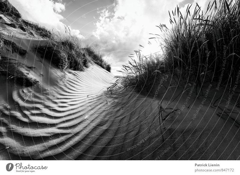 Wonderland Natur Ferien & Urlaub & Reisen Pflanze Sommer Sonne Meer Landschaft Strand Ferne Umwelt Küste Freiheit Sand Wetter Tourismus Sträucher