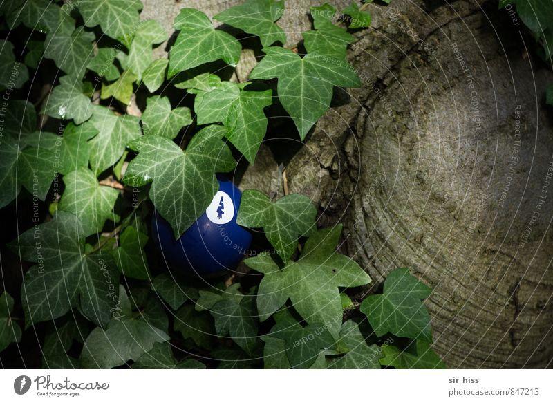 Alien im Unterholz Natur Pflanze Baum Efeu Zeichen dunkel unten blau braun grün Kunst Surrealismus verstecken Durchblick seltsam Gedeckte Farben