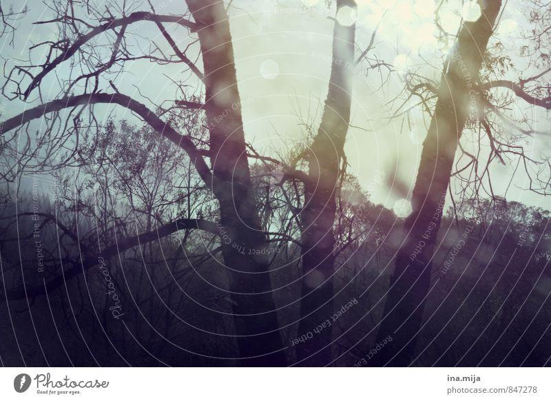 geheimnisvoller wald Himmel Natur Landschaft ruhig dunkel Wald Umwelt Herbst Tod Garten träumen Park glänzend Wetter Regen Idylle