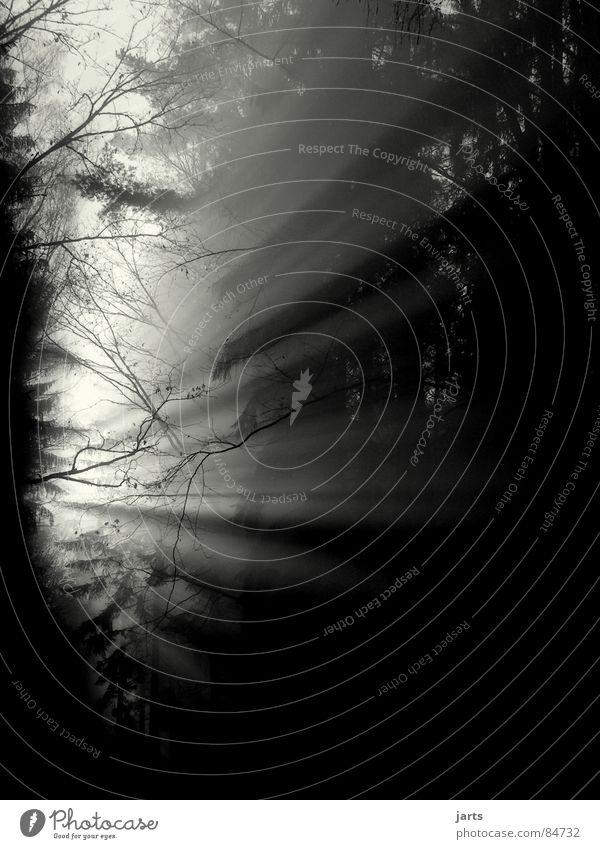 Am Anfang..... Licht Sonnenstrahlen Nebel Wald Baum Tanne Sonnenaufgang Beginn Nadelwald Himmelskörper & Weltall gefährlich Lichtstrahl Beleuchtung jarts