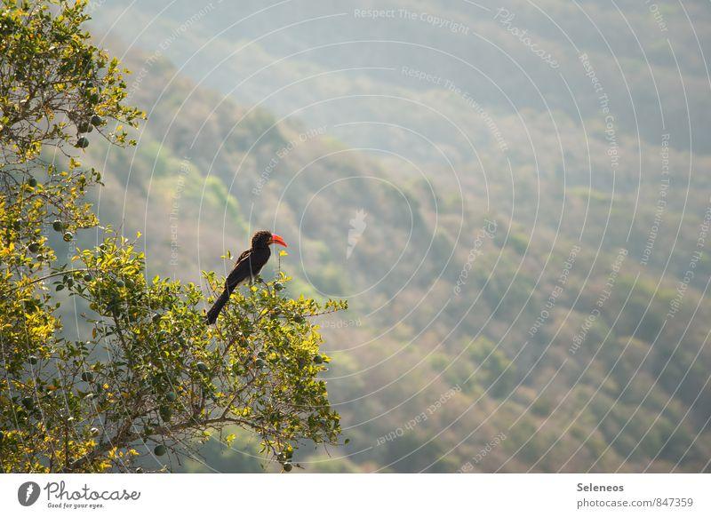 Aussicht genießen Natur Ferien & Urlaub & Reisen Pflanze Baum Landschaft Tier Ferne Umwelt natürlich Freiheit Vogel Wildtier Tourismus Ausflug beobachten