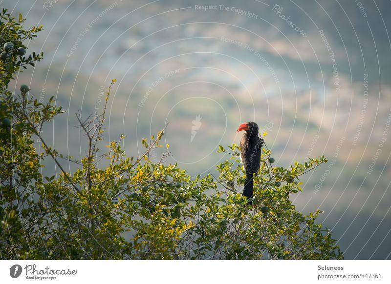 von oben herab Natur Ferien & Urlaub & Reisen Sonne Baum Landschaft Tier Ferne Umwelt Berge u. Gebirge natürlich Freiheit Vogel Wildtier Tourismus frei Ausflug