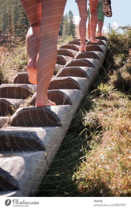 Steigbaum steigen Mensch Kind Natur Jugendliche Sommer Freude Bewegung Herbst feminin Sport Holz Gesundheit gehen Beine Freizeit & Hobby Zusammensein