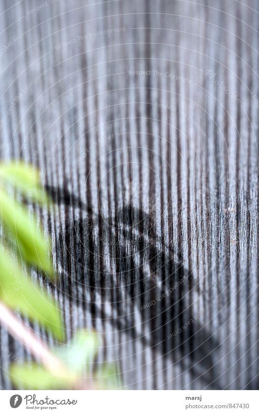 Herbst? Natur Pflanze grün Sommer Einsamkeit Blatt dunkel kalt Traurigkeit natürlich grau Holz klein träumen authentisch einfach